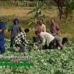 """สื่อวีดิทัศน์ ชุด """"บทบาทเกษตรกรไทย"""" ตอนที่ 10 ปัญหาที่ดินทำกิน"""