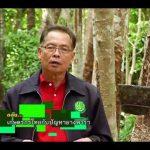 """สื่อวีดิทัศน์ ชุด """"บทบาทเกษตรกรไทย"""" ตอนที่ 5 เกษตรกรไทยกับปัญหายางพารา"""