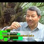 """สื่อวีดิทัศน์ ชุด """"บทบาทเกษตรกรไทย"""" ตอนที่ 6 ปาล์มน้ำมันพืชเศรษฐกิจไทย"""
