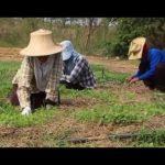 16 คนรุ่นใหม่กับวิถีชีวิตเกษตรอินทรีย์เป็นอยู่และยั่งยืน