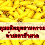 ลดต้นทุนผลิตอุตสาหกรรมกล้วย ด้วยเตาชีวมวล จ.กำแพงเพชร