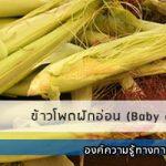 ข้าวโพดฝักอ่อน (Baby corn)
