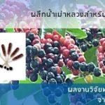 ผลึกน้ำเม่าหลวงสำหรับชงดื่ม โดยสำนักงานพัฒนาการวิจัยการเกษตร (องค์การมหาชน) หรือ สวก.