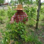 สภาเกษตรกรจังหวัดสระบุรีหนุนเกษตรกรต่อยอดแปรรูปผักหวานป่าสร้างมูลค่าเพิ่มไร้คู่แข่ง