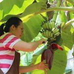 สภาเกษตรกรอุตรดิตถ์หนุนเกษตรกรขายผลิตภัณฑ์เกษตรภายใต้สถานการณ์โควิด